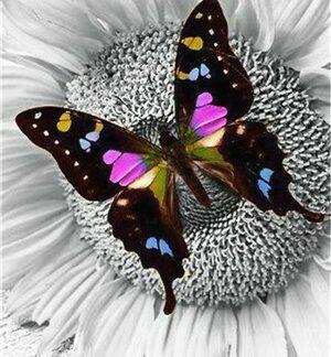 Broderie diamant - Insecte